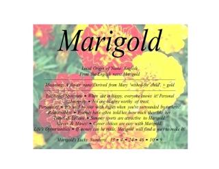 marigold_001