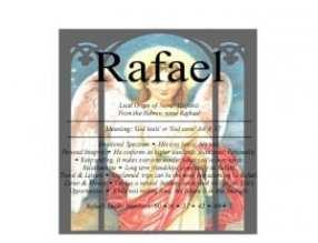 rafael1_pagenumber.001-300x230-300x230
